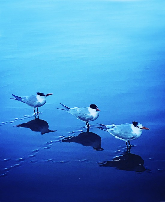'Three Terns at Low Tide'
