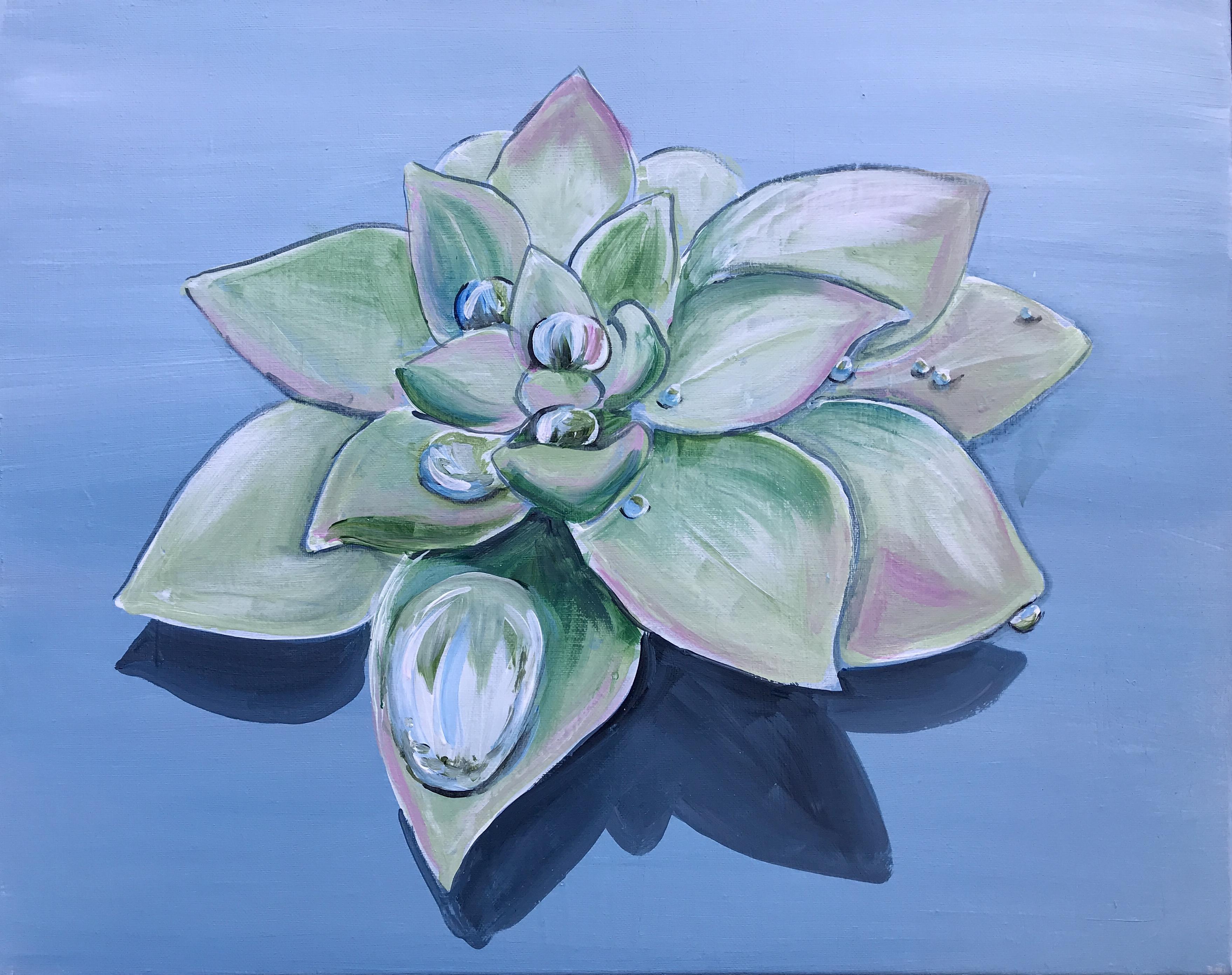 'Raindrop Succulent'