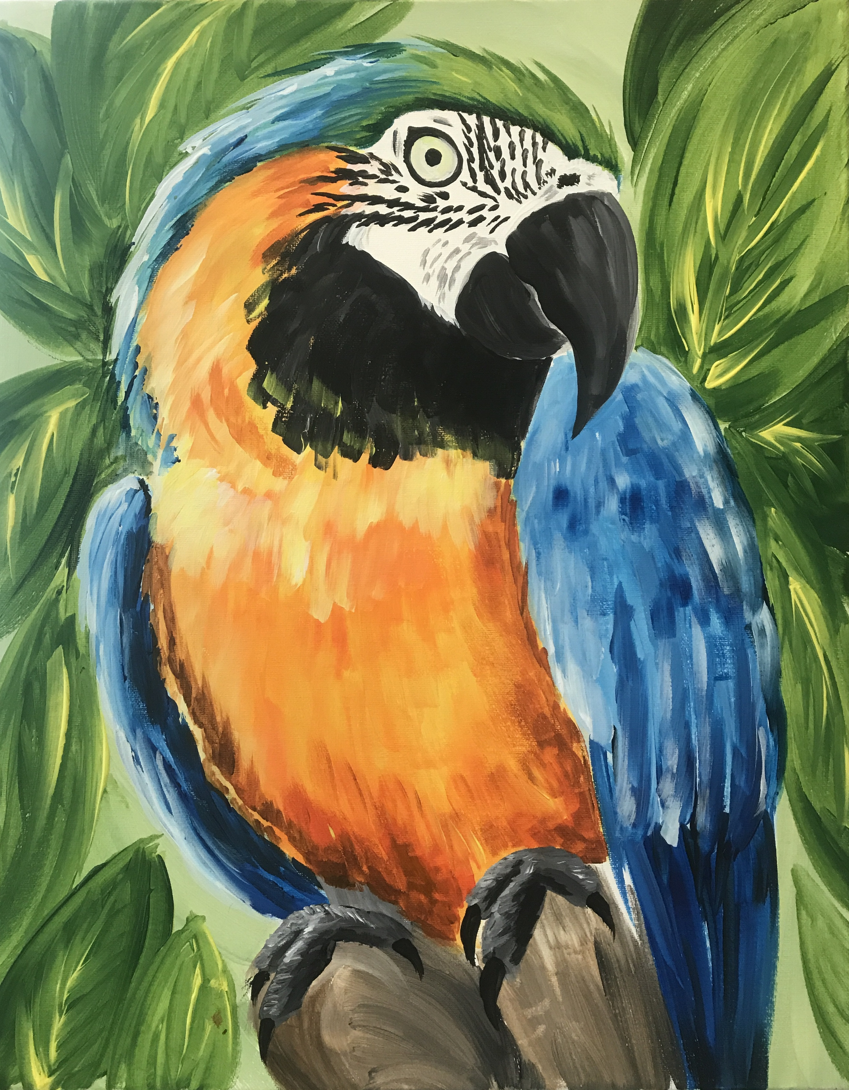 Blue & Gold Macaw - Fundraiser for Free Flight
