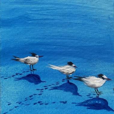 Terns in a Row